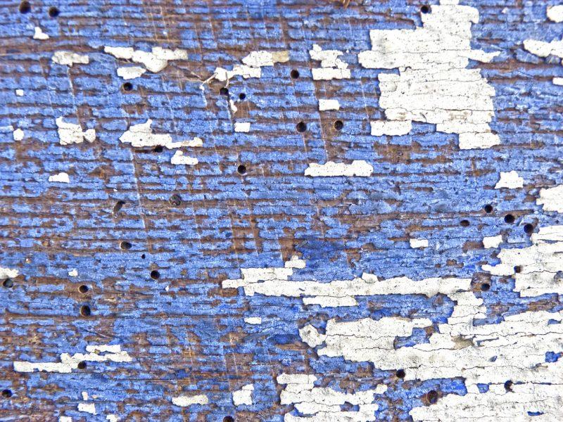 Disinfestazione termiti: metodi green per ottenere risultati concreti e 100% efficaci