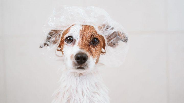 Come fare il primo bagnetto al vostro cucciolo