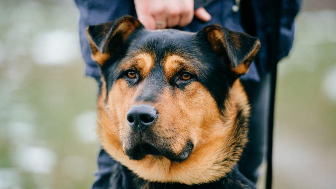 Come scegliere la cuccia per cani più adatta