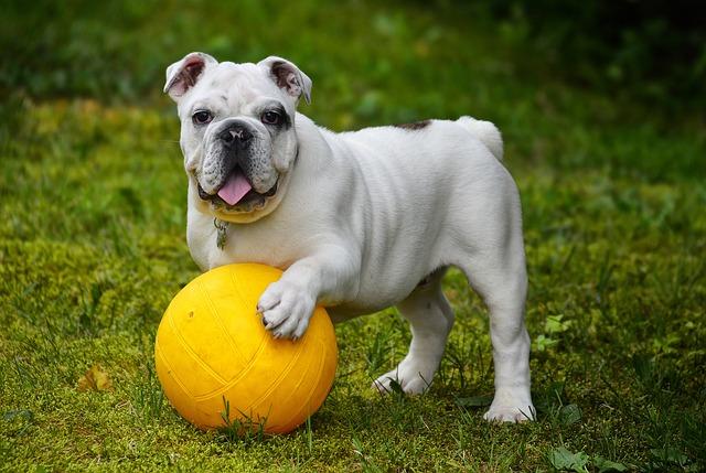Attività fisica per i cani: idee di attività da fare insieme